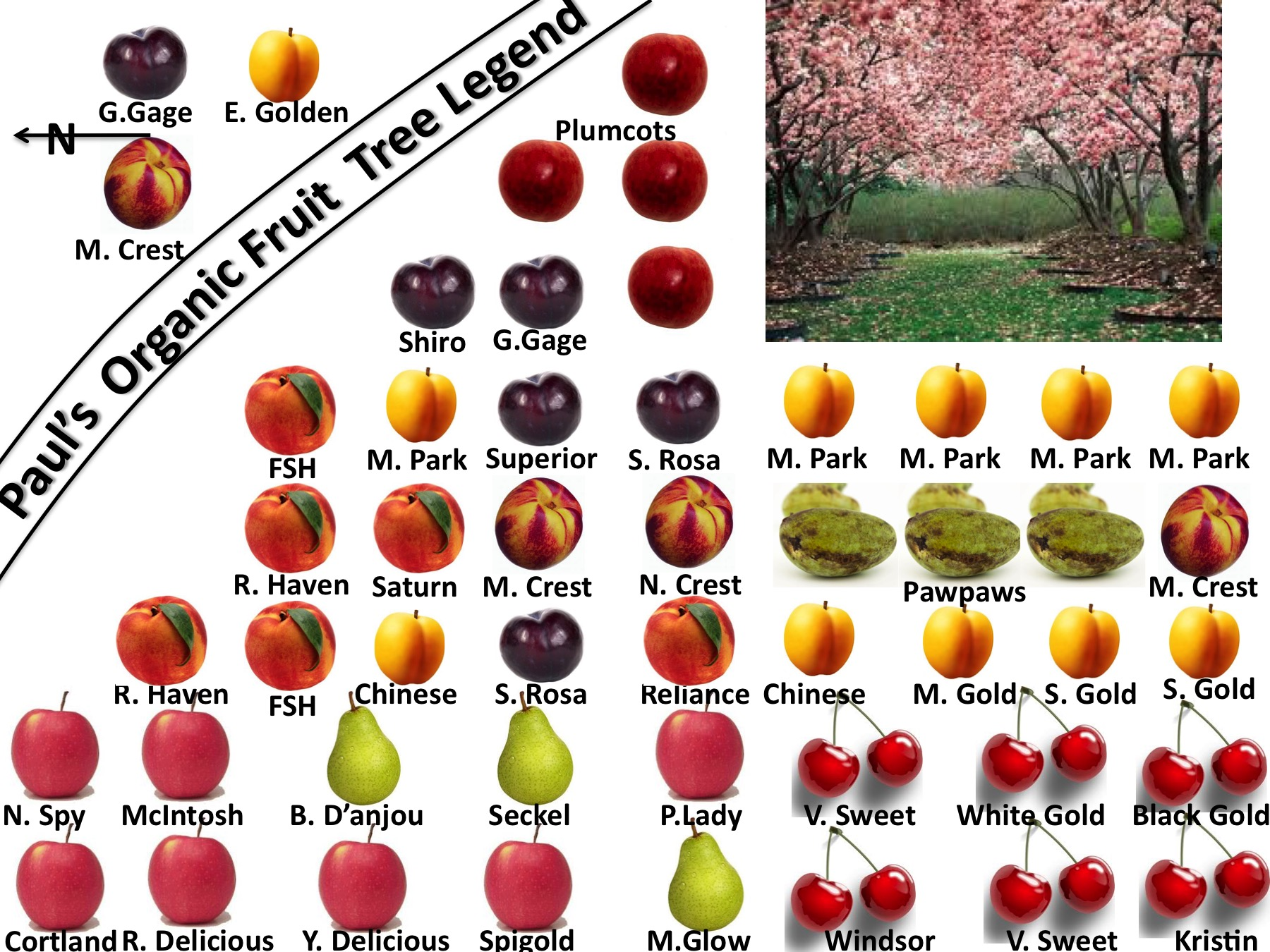 Fruit Tree Legend