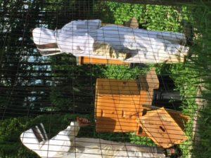 Beekeeping on an organic farm
